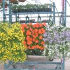Easter Flowers are Here