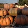 October happenings @Round Tree Farm