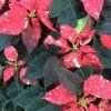 Christmas Season at Round Tree Farm